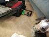 Permission to investiage Gramma\'s suitcase?